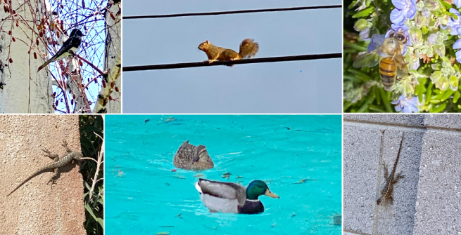 Collage of birds, reptiles and animals around the neighborhood