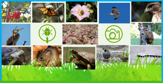 Collage of photos from plants, animals, and insects