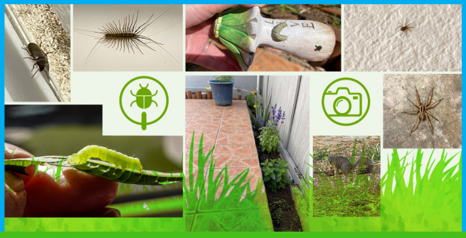 """Collage of insects, animal, and plant life in an """"observation cold spot"""" area"""