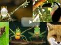 Collage of nature documentaries offered through Kanopy