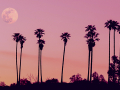 A pink moon amongst the palm trees