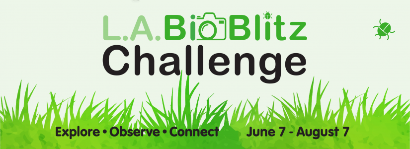 Text that reads L.A. BioBlitz Challenge