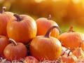 Group of pumpkins in rural landscape